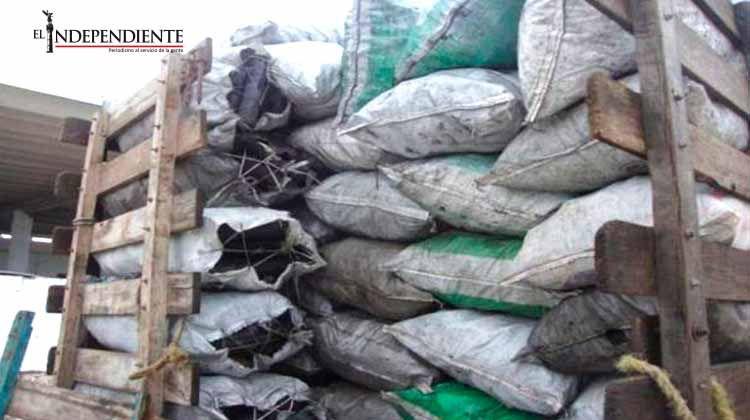 La Profepa asegura 4.5 toneladas de carbón vegetal en Tabasco