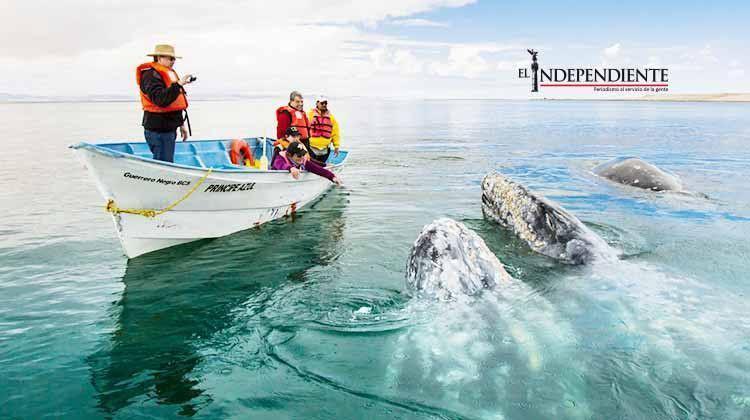 Inició la temporada de ballenas sin ejemplares