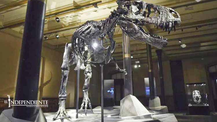 Museo de Berlín exhibe tiranosaurio rex