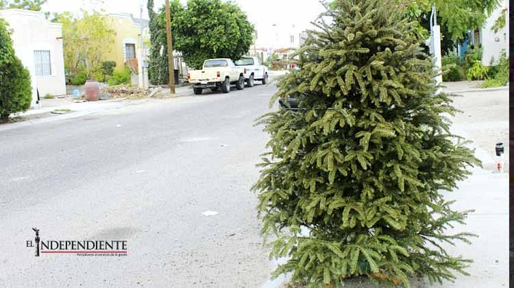 Para evitar accidentes, camión recolector de basura recogerá arbolitos navideños