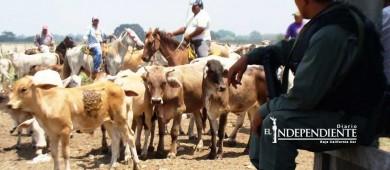 Reporta BCS 24 casos de robo de ganado en 5 meses