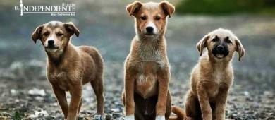 Sólo hay una denuncia por maltrato animal en la PGJE