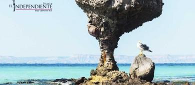 Playas de La Paz  en óptimas condiciones para su disfrute