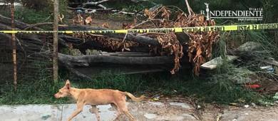 Muere en casa y sus perros la devoran en Sonora