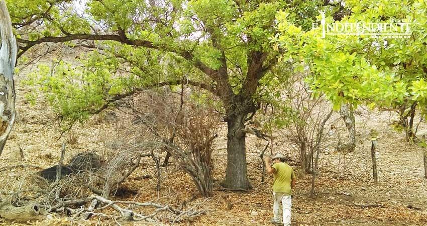 Cuenta BCS con 25 áreas protegidas por Semarnat