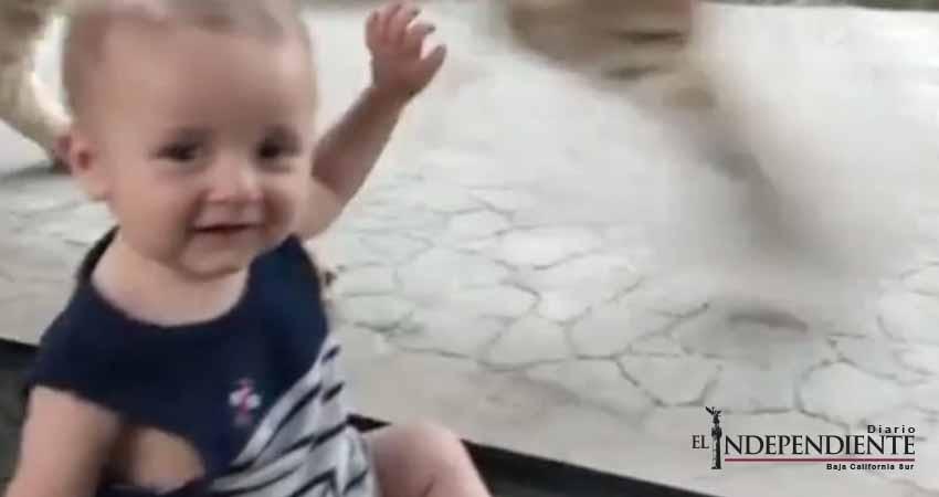Bebé triunfa con su reacción ante 'ataque' de león en el zoológico