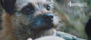 La campaña contra el abandono de animales que debes ver