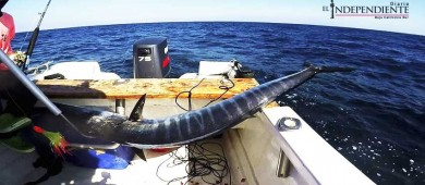 Faltan 10 días para el 1er. Torneo de Pesca de Wahoo