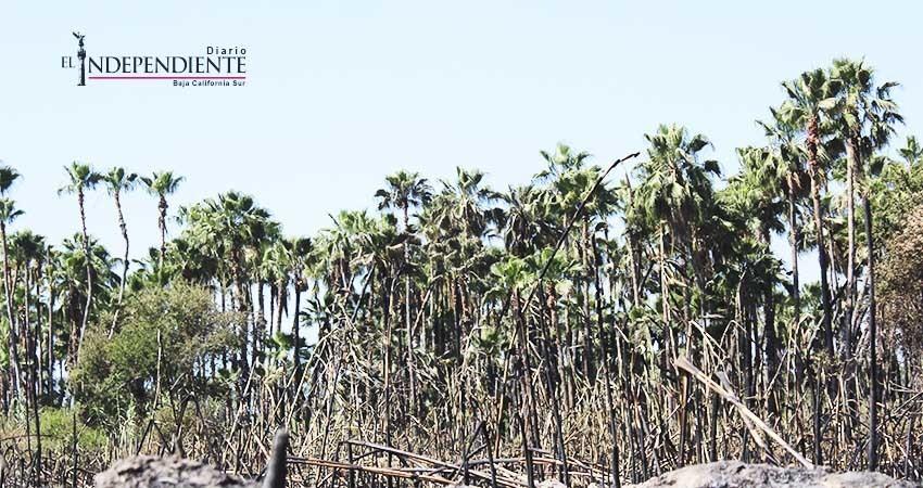Exhorta Ecología y Medio Ambiente a no cocinar con fuego en el Estero