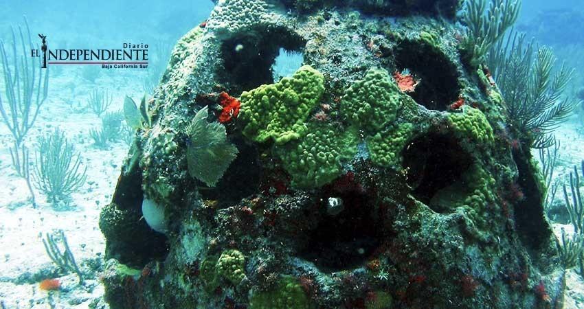 Instalan arrecifes artificiales en Mulegé para recuperar fauna marina