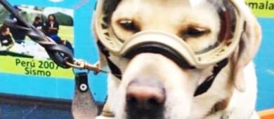 Frida, la perrita que ha conquistado las redes tras el sismo