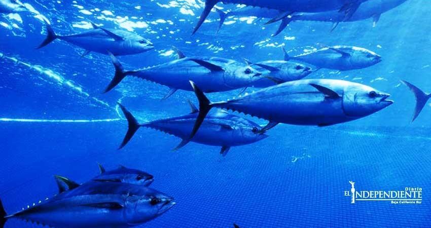 Piden pescadores de Comondú que la Marina realice la vigilancia en aguas de Baja California Sur (BCS)