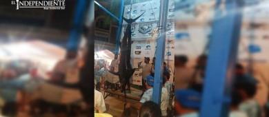 Con un marlín de 574 libras se coronó el campeón del torneo Bisbee´s Offshore
