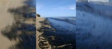 Mancha en playas del este, corresponde a un fenómeno natural: Dirección de Ecología