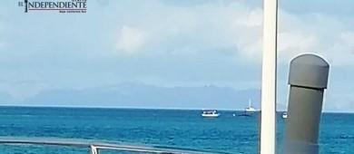 Localizan dos ballenas varadas en la Bahía de La Paz