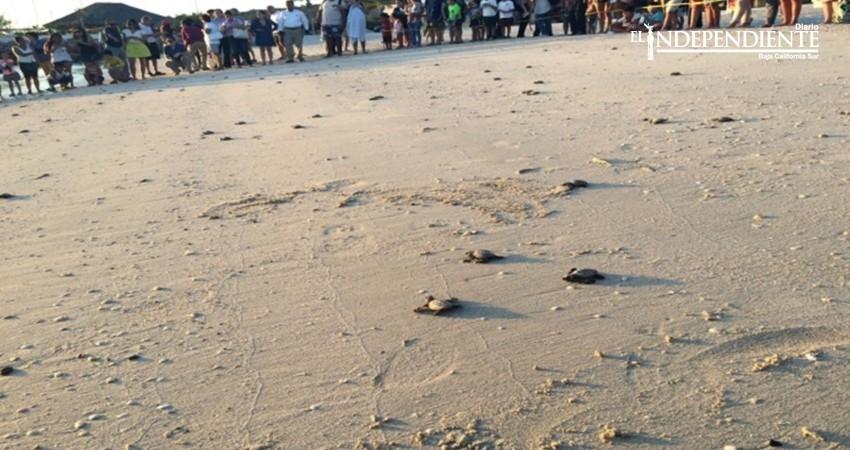 Reintegra Profepa 368 crías de tortuga marina a su hábitat