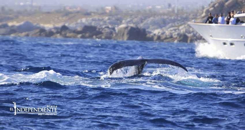 Se observan los primeros avistamientos de ballenas en la Bahía de CSL