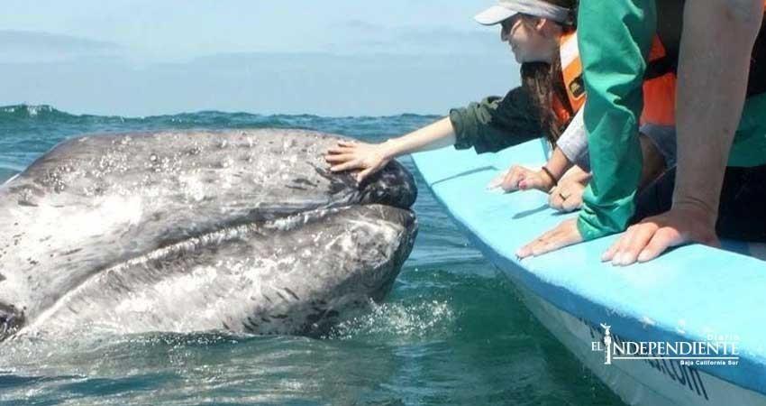 Inicia la temporada de avistamiento de ballenas en Mulegé