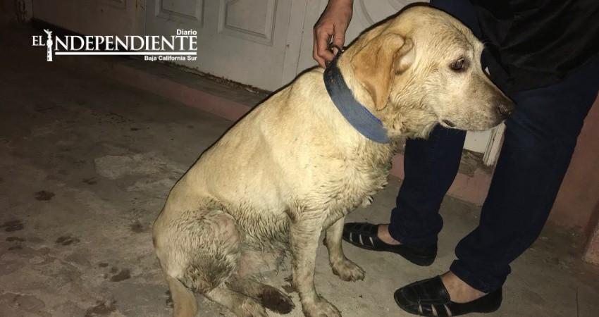 Pirotecnia causa severos daños a los animales: CANIMX