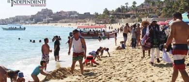Blue Flag logrará incrementar la protección de especies marinas en la playa de El Médano