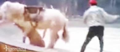 Tigre y león atacan a caballo durante fatal ensayo de circo