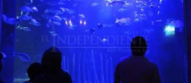 Por revisarse el plan de acción para construcción de Los Cabos Aquarium