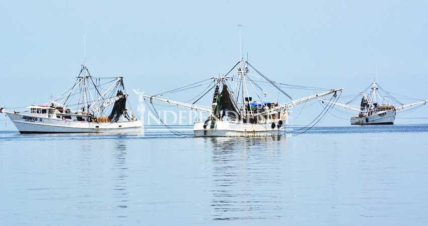 BCS es 3er lugar en volumen y valor de producción pesquera a nivel nacional