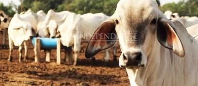 Ganaderos buscarán diálogo con el titular de la PGJE, se dicen hartos del robo de ganado
