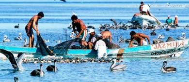 Cooperativa en Pto San Carlos se niega a ofrecer seguro médico a pescadores