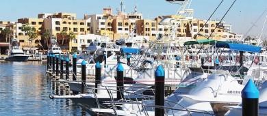 Reforzará API vigilancia de interacción de fauna marina en andadores turísticos