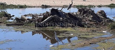 Conmemorarán el Día de la Biodiversidad Ecológica con una limpieza del humedal Yenekamú