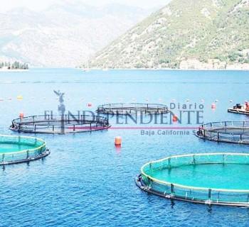 Debe migrar BCS a la acuacultura: Secretaría de Economía