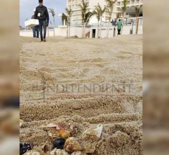 Hasta tener resolución, no se regresa bandera a playa del RIU Santa Fe: Blue Flag México