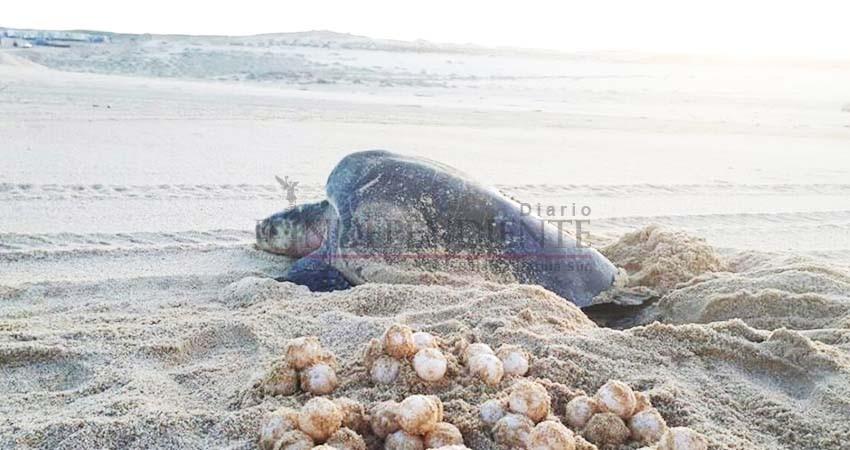 Permisos federales para la protección de tortugas abarcan solo 20 metros de playa
