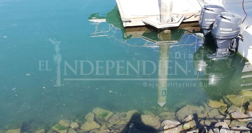 Sucio y con extrañas manchas el espejo de agua de la marina turística de CSL