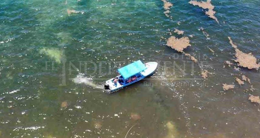 Playa del Carmen transformada en pantano por sargazo