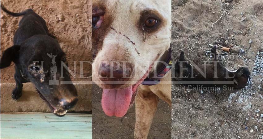 """Proyecto """"4 Patas"""" una farsa, es un campo de concentración para perros"""