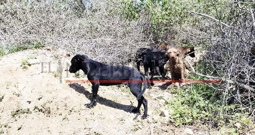 Urge consolidar creación de Centro de Control Animal en Los Cabos