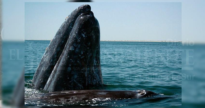 National Geographic pone los ojos en Puerto Chale