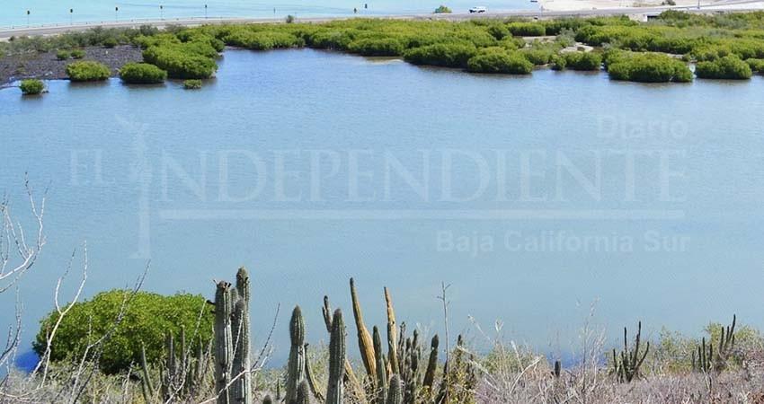 Iniciará Ayuntamiento de La Paz reforestación de manglares