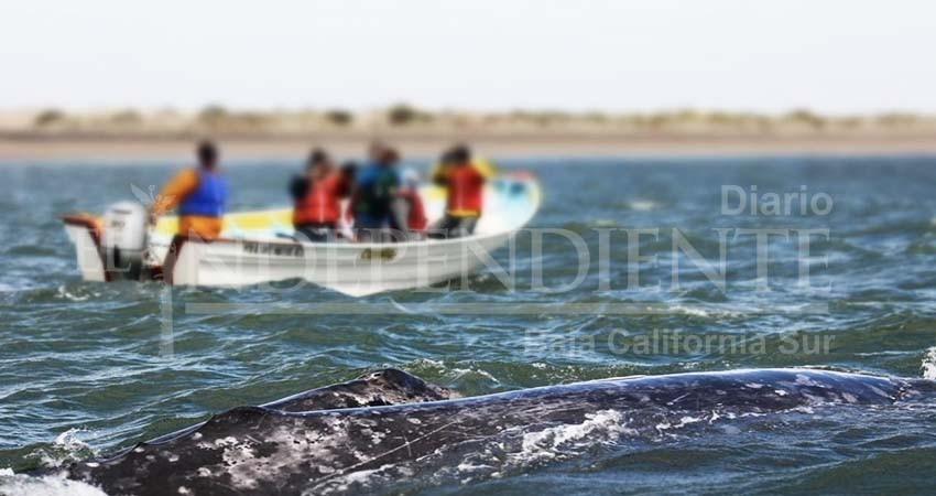 En Puerto Chale sí habrá permisos para avistamiento de la ballena gris: Alcalde