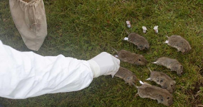 Alerta en China por caso de peste bubónica