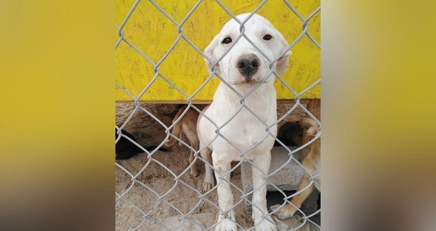 Durante junio fueron dados en adopción cinco perros por parte del CEMAC