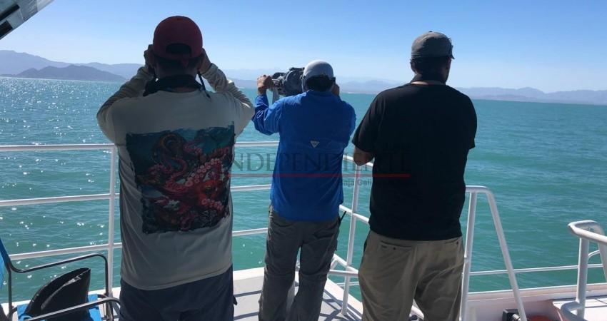 Confirman avistamiento de vaquitas marinas en Golfo de California