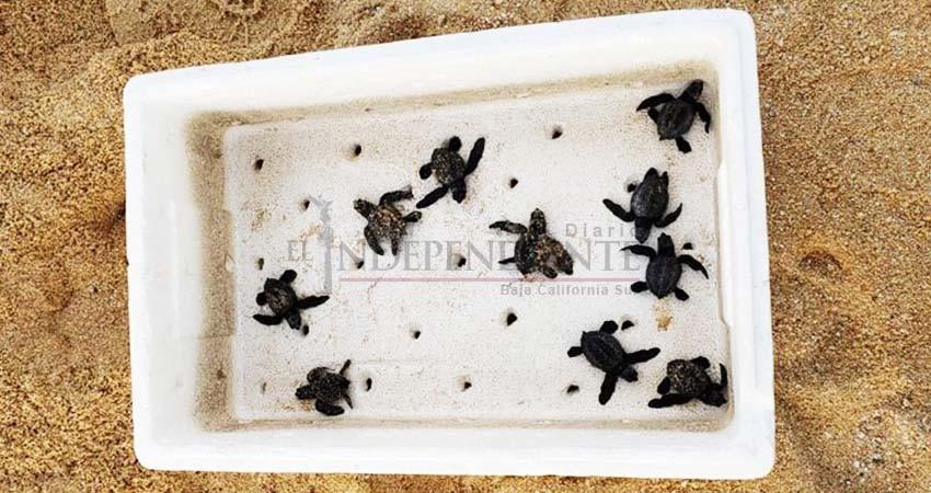 A pesar de las denuncias ciudadanas maquinaria pesada destruye nido de tortugas
