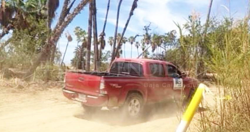 Denuncian tala indiscriminada de palmares en el Estero josefino