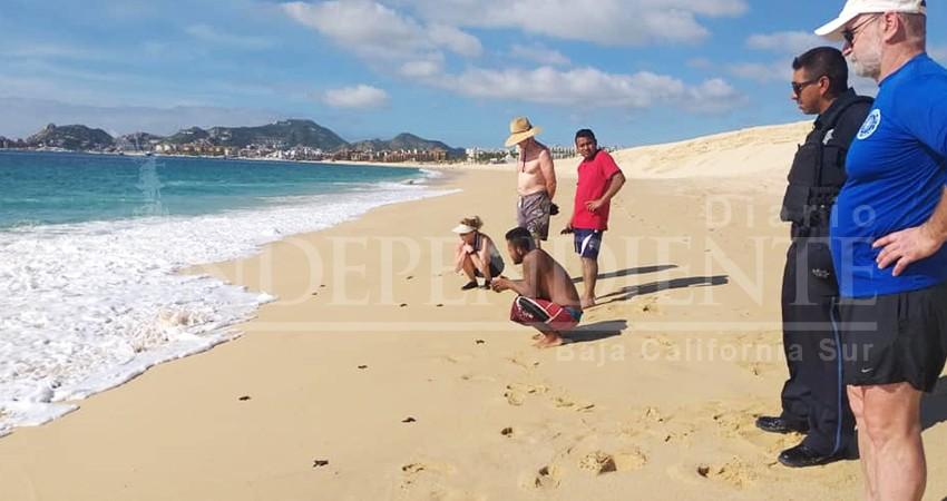 Sorprenden a bañistas de playa El Médano decenas de tortugas recién nacidas