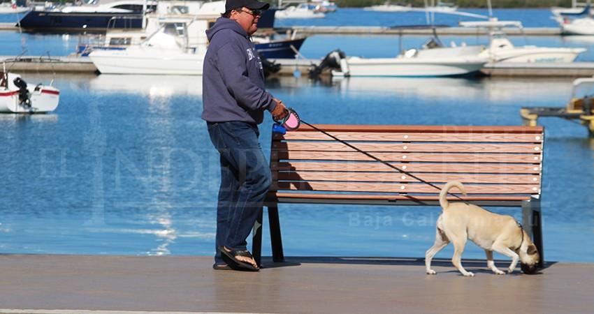 No se prohibirá visitar el malecón de La Paz con mascotas