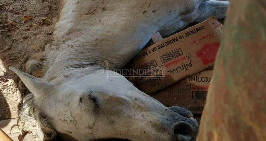 Indigna a josefinos la muerte inhumana de un caballo