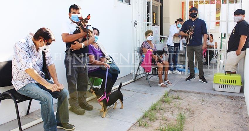 Jornadas de esterilización canina y felina en La Paz son permanentes